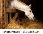 White Horse Eating Hay  Straw ...