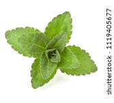 stevia leaves pieces isolated... | Shutterstock . vector #1119405677