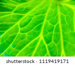 blurred photo green leaves...   Shutterstock . vector #1119419171