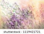 beautiful flower garden with...   Shutterstock . vector #1119421721