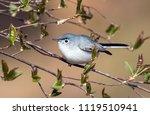 closeup of a cute small blue... | Shutterstock . vector #1119510941