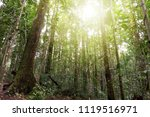 maliau basin conservation area... | Shutterstock . vector #1119516971