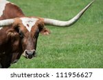 A Longhorn Bull In A Pasture ...