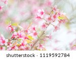 cherry blossom in spring with... | Shutterstock . vector #1119592784