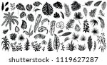 tropical leaves silhouettes... | Shutterstock .eps vector #1119627287