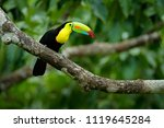 toucan sitting on the branch in ... | Shutterstock . vector #1119645284