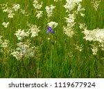 beautiful spring field flowers | Shutterstock . vector #1119677924