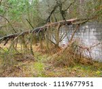 stone wall and fallen tree | Shutterstock . vector #1119677951