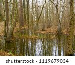 large flooded trees in the... | Shutterstock . vector #1119679034