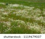 beautiful spring field daisies... | Shutterstock . vector #1119679037