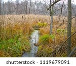 wetland forest lake in late... | Shutterstock . vector #1119679091