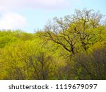 very large oak tree in the... | Shutterstock . vector #1119679097