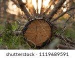 cross section of the fallen cut ...   Shutterstock . vector #1119689591