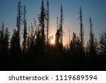 sunset sun behind the forest...   Shutterstock . vector #1119689594