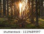 evening in the forest. fallen...   Shutterstock . vector #1119689597