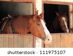 outdoor portrait of a horse | Shutterstock . vector #111975107