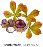 Horse Chestnuts Aesculus ...