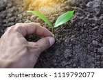 people are holding tree... | Shutterstock . vector #1119792077