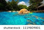 golden retriever  dog ...   Shutterstock . vector #1119809801
