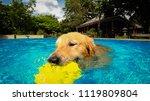 golden retriever  dog ...   Shutterstock . vector #1119809804