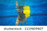 golden retriever  dog ...   Shutterstock . vector #1119809807