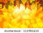 hanging fall maple tree leaves...   Shutterstock . vector #111981614