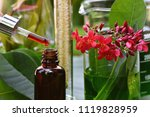 scientist with natural drug... | Shutterstock . vector #1119828959