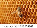 Yellow Beautiful Honeycomb With ...