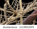 jungle gymn for animals in... | Shutterstock . vector #1119852095