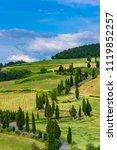 cypress tree scenic winding... | Shutterstock . vector #1119852257