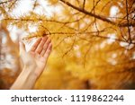 golden autumn with yellow trees ... | Shutterstock . vector #1119862244