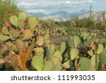 Prickly Pear Cactus In Desert...
