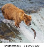 Brown Bear On Alaska