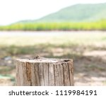 empty  old  tree  trunk  for ... | Shutterstock . vector #1119984191