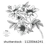 sketch floral botany collection.... | Shutterstock .eps vector #1120066241