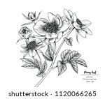 sketch floral botany collection.... | Shutterstock .eps vector #1120066265