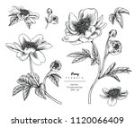 sketch floral botany collection.... | Shutterstock .eps vector #1120066409