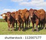 4 brown stabilizer cows in... | Shutterstock . vector #112007177