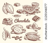 hand drawn cacao  leaves  cocoa ... | Shutterstock .eps vector #1120146077