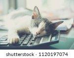 sleeping cat on a calculator | Shutterstock . vector #1120197074