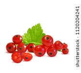 fresh  nutritious and tasty red ... | Shutterstock .eps vector #1120204241