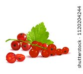 fresh  nutritious and tasty red ... | Shutterstock .eps vector #1120204244