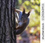 Squirrel On A Tree With Contou...
