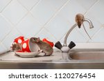 three young rats  rattus... | Shutterstock . vector #1120276454