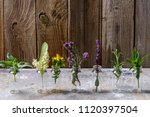 different types of fresh herbs  ... | Shutterstock . vector #1120397504