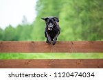 black labrador jumping over the ... | Shutterstock . vector #1120474034