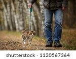 walking with cat on a leash... | Shutterstock . vector #1120567364