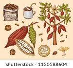 cocoa beans and hot chocolate.... | Shutterstock .eps vector #1120588604