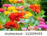 Stock photo flowers in the garden 112059455