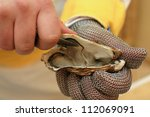 Fresh Oyster Held Open With A...